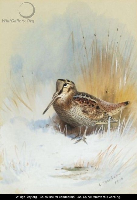 A Woodcock - Archibald Thorburn