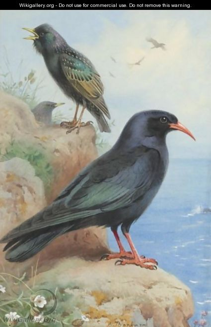 A Rock Starling And A Common Chough - Archibald Thorburn