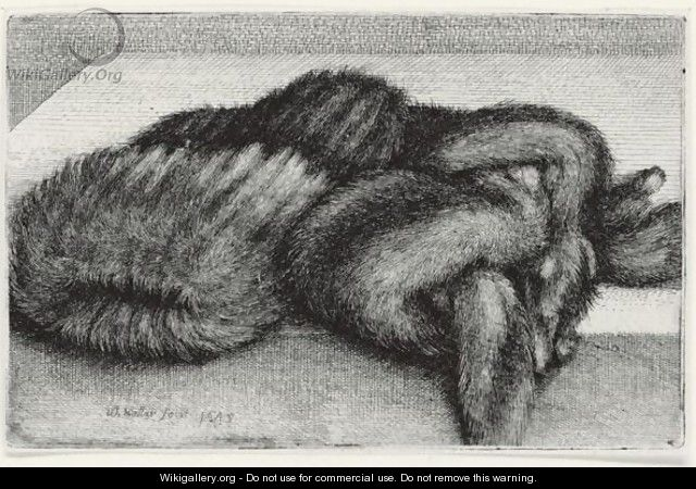 Muff And Fur Stole (Pennington 1947) - Wenceslaus Hollar