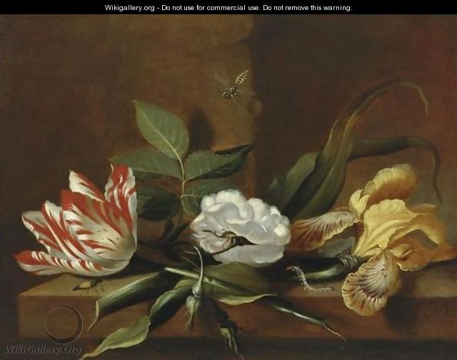 Still Life With A Yellow Iris, A Parrot Tulip, A White Rose And Insects On A Wooden Table Ledge - Jacob Marrel