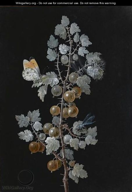 A Gooseberry Branch, With A Dragonfly, Butterfly And Caterpillar - Barbara Regina Dietzsch