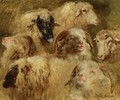 Heads Of Sheep And Rams - Rosa Bonheur