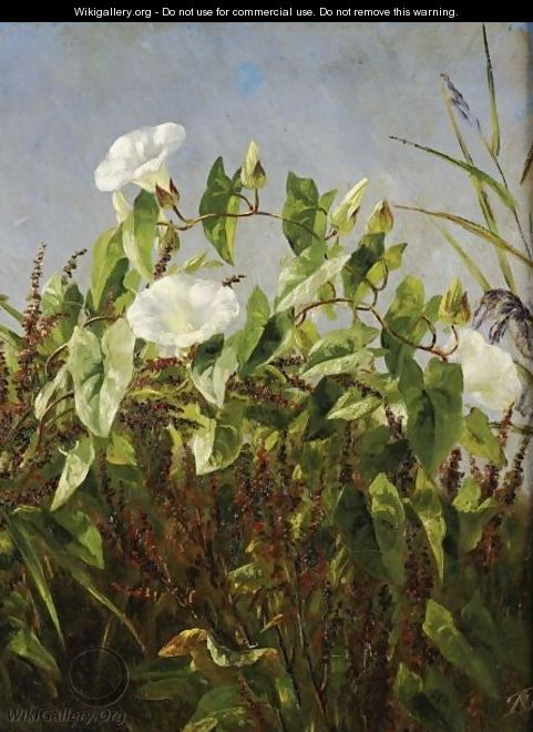 Morning Glories - Anthonore Christensen