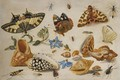 A Swallowtail (Papilio Machaon), Red Admiral (Vanessa Atalanta) And Other Insects With Shells And A Sprig Of Borage (Borago Officinalis) - Jan van Kessel