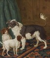 A Longhaired Black-And-White Dog With Bushy Tail And Two Brown Spotted White Puppies In An Interior - Tethart Philip Christiaan Haag