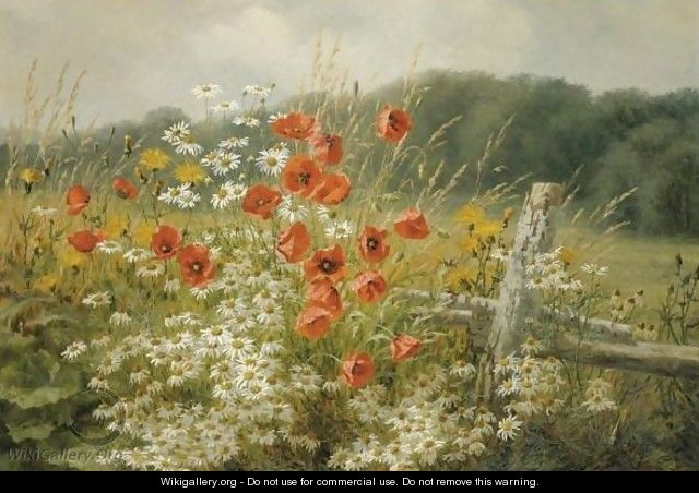 Poppies And Daisies - Anthonore Christensen