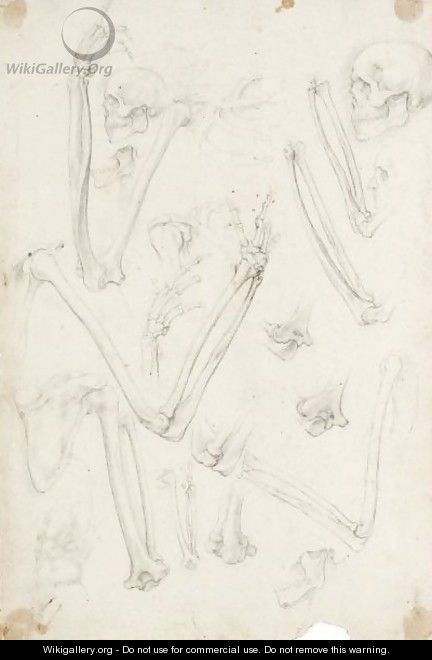 A Sheet Of Studies Of Human Skeletons Arms And Skulls - Giovanni Ambrogio Figino