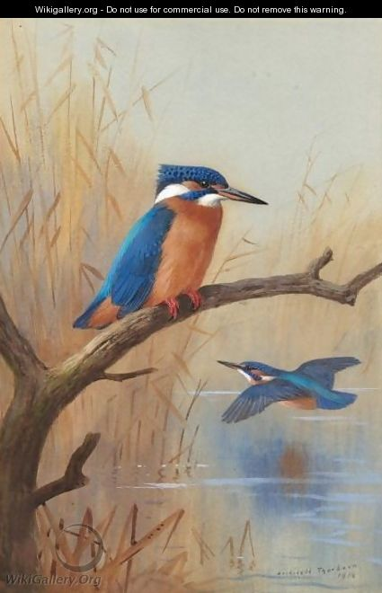 A Pair Of Kingfishers - Archibald Thorburn