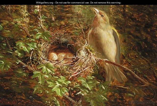 Green Finch Guarding The Nest - William Hughes
