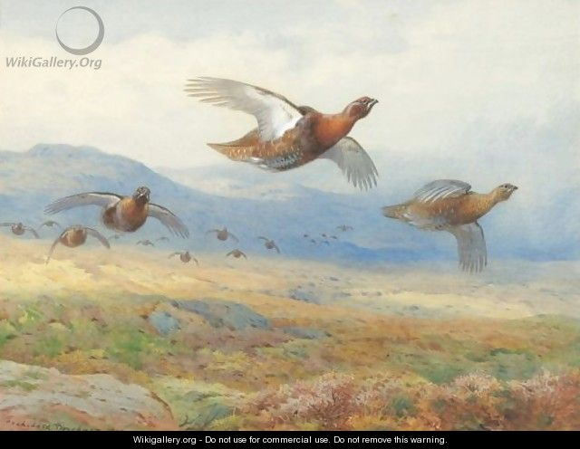 A Covey Of Grouse In Flight - Archibald Thorburn