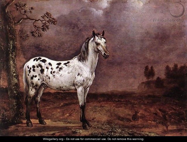 The Spotted Horse - Paulus Potter