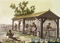Slaves preparing tobacco, Virginia, America, c.1790, from 'Le Costume Ancien et Moderne' - G. Bramati