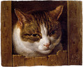 A Cat Peeping Through A Fence - Cornelis Saftleven