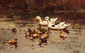 Ducks Having A Swim - Johannes Frederik Hulk