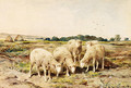 Grazing Sheep - Anton Mauve