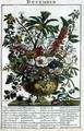 December, from 'The Flower Garden Displayed' - Pieter Casteels