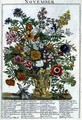 November, from 'The Flower Garden Displayed' - Pieter Casteels