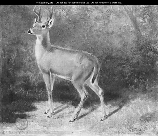Deer--Sketch from Nature - Arthur Fitzwilliam Tait