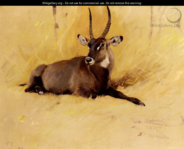 A Common Waterbuck - Wilhelm Kuhnert