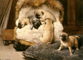 Nest Met Jonge Mastiffs (A Nest Of Puppy Pugs) - Otto Eerelman